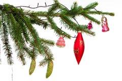 Branch of Christmas fir tree Royalty Free Stock Photos
