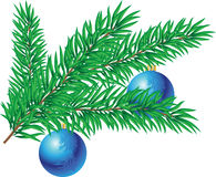 Branch of christmas tree Stock Image