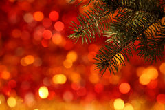 Branch of Christmas tree. Against red light background stock photography