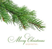 Branch of Christmas tree Royalty Free Stock Photos