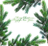 Branch of Christmas tree stock photos