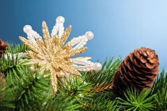 Branch of Christmas tree Royalty Free Stock Images