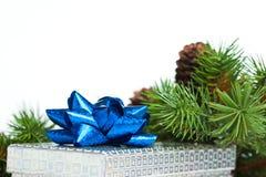 Branch of Christmas tree Stock Photo