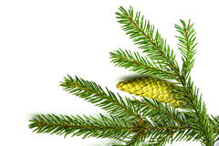 Branch of a Christmas Tree Stock Image