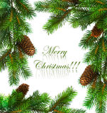 Branch of Christmas tree Royalty Free Stock Photo