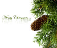 Branch of Christmas tree. On white Royalty Free Stock Images