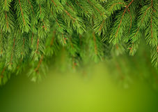Branch of Christmas tree background royalty free stock images
