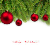 Branch of Christmas tree background. Isolated Stock Photography