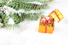 Branch of Christmas tree with box gift golden Stock Images