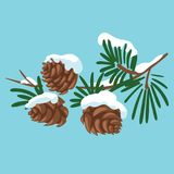 Branch of a Christmas tree with cones. A cartoon branch of fir trees with snow. Winter illustration for children. Branch of a Christmas tree with cones. A Royalty Free Stock Photo
