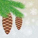 Branch of christmas tree with  cones Stock Photo