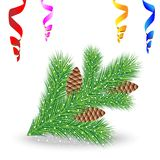 Branch of christmas tree with cones Stock Image
