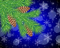 Branch of christmas tree with cones Royalty Free Stock Images