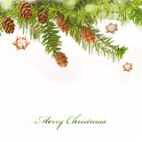 Branch of Christmas tree and gingerbread. On white background Royalty Free Stock Photos