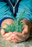 Branch of a Christmas tree in Human hand with pieces of foam pla Royalty Free Stock Photos