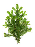 Branch of christmas tree isolated on white background. Pine spri Royalty Free Stock Photography