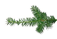 Branch of a Christmas tree for New year isolated on white background royalty free stock photography