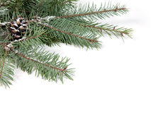 Branch of Christmas tree with pine cone Royalty Free Stock Photos