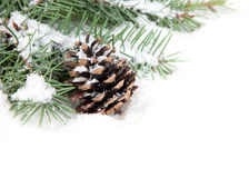 Branch of Christmas tree with pine cone. On white background Royalty Free Stock Photo