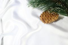 The branch of a Christmas tree and a pine cone Stock Image