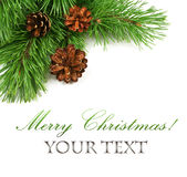 Branch of Christmas tree and pine cones Stock Image