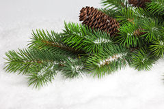 Branch of Christmas tree. With pinecone Stock Photography