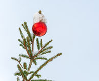 Branch of Christmas tree with red Christmas ball. Fir tree branch covered with snow with red Christmas ball Royalty Free Stock Image