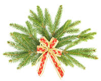 Branch of christmas tree with red ribbon Stock Photos