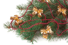 Branch of Christmas tree with short needles decorated red beads and bows isolated on white background Royalty Free Stock Images