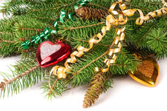Branch of Christmas tree with short needles decorated toys in the form heart  on white background Royalty Free Stock Photos