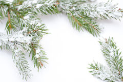 Branch of Christmas tree in snow, on white background.  Royalty Free Stock Photos
