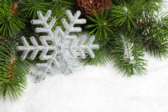 Branch of Christmas tree Royalty Free Stock Photography
