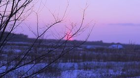 Branch close-up trees at sunset, winter forest night, grass swaying wind, snow in field on sunset background stock video