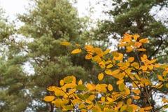 Colorful leaves at fall season Stock Photo