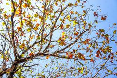 Branch and colorfull leaves against the sky Stock Image