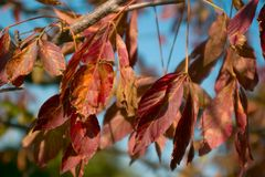 Branch of colourful autumn leaves Stock Photos