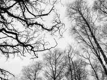 Branch conceptual image. Black and white picture of branch in forest Royalty Free Stock Photography
