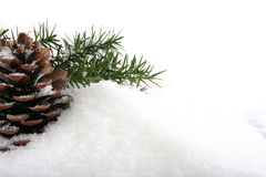 Branch and cone on white snow. Christmas background of pine's branch and cone Royalty Free Stock Image