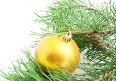 Branch with cones and Christmas tree toy Royalty Free Stock Photography