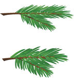 Branch of conifer. Spruce twig as a Christmas decoration Stock Photos