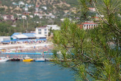 Branch of conifer in front of a coastal Royalty Free Stock Photos