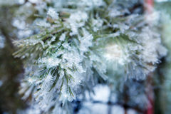 Branch of a conifer with snow in lights Stock Image