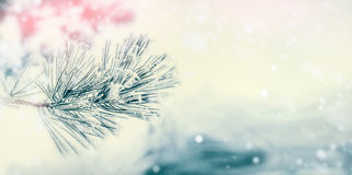 Branch of coniferous tree : cedar or fir covered with hoarfrost and snow at winter day background. Winter Royalty Free Stock Photography