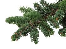 Branch of a coniferous tree, fur-tree Stock Photos