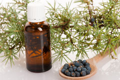 Branch of conifers junipers, wooden spoon ful of blue berries an. D little bottle of fresh oil for aromatherapy on white background Royalty Free Stock Photos