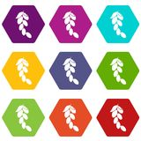 Branch of cornel or dogwood berries icon set color hexahedron Stock Images