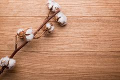 A branch of cotton on a wooden table royalty free stock photos