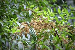 Berries in the dense canopy Royalty Free Stock Photography