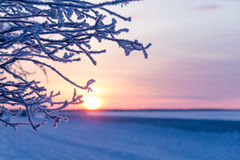 Branch covered with frosty rime.  winter, sunny day. sunset through the frost Stock Photography
