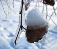 Branch covered with ice. And snow Royalty Free Stock Images